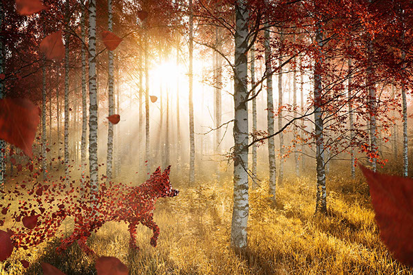 animals  charles vögele  advertising   autumn  leafes  clouds  rain  water  Deer  fox  rabbit eagle Viaframe