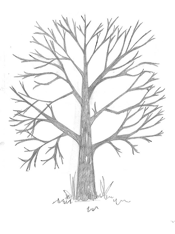 This is a graphic of Remarkable Leafless Tree Drawing