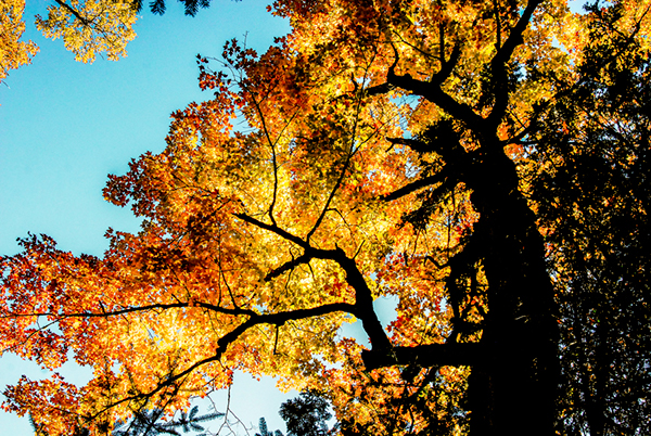 nature photography trees Nature