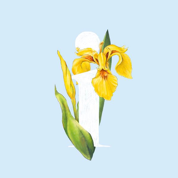 36 Days of type - Flower alphabet