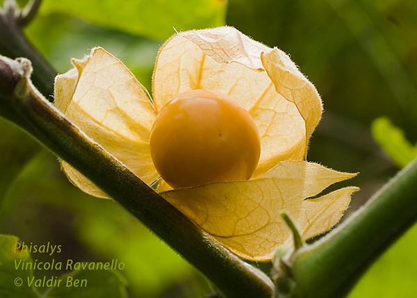 close fruta natureza