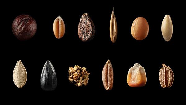 Macro seeds for BASF