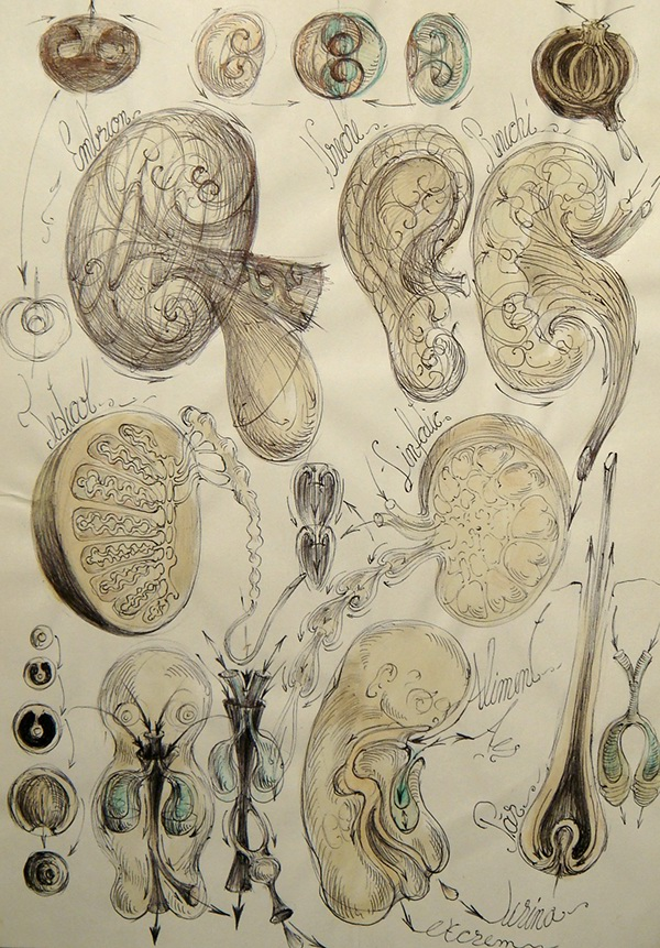 Image Result For Life Cycle Of Butterfly Still Model