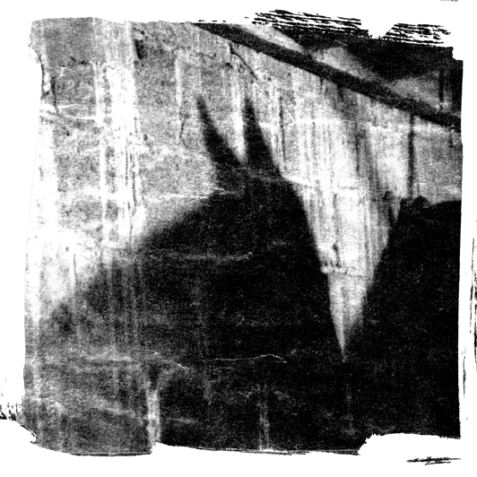 horses,Photography ,Black&white