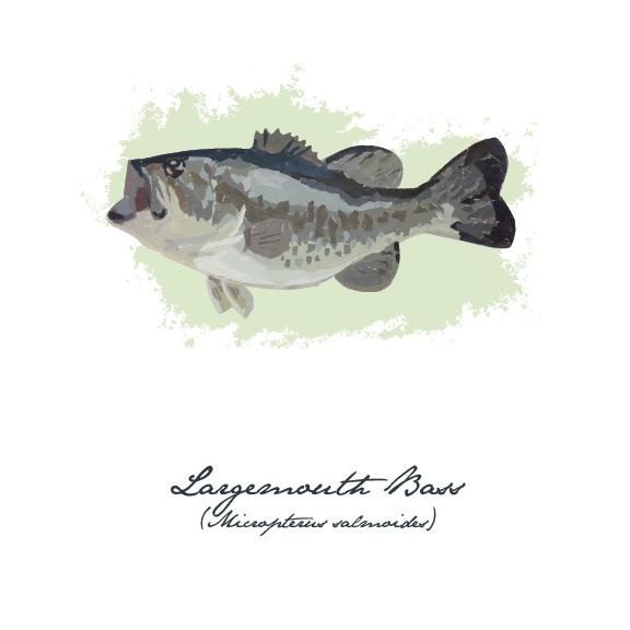 fishing bluegill cut-paper fish Lake Fish sunfish book illustration