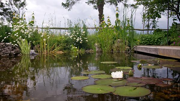 Image Result For Fiona Stephenson Garden Design