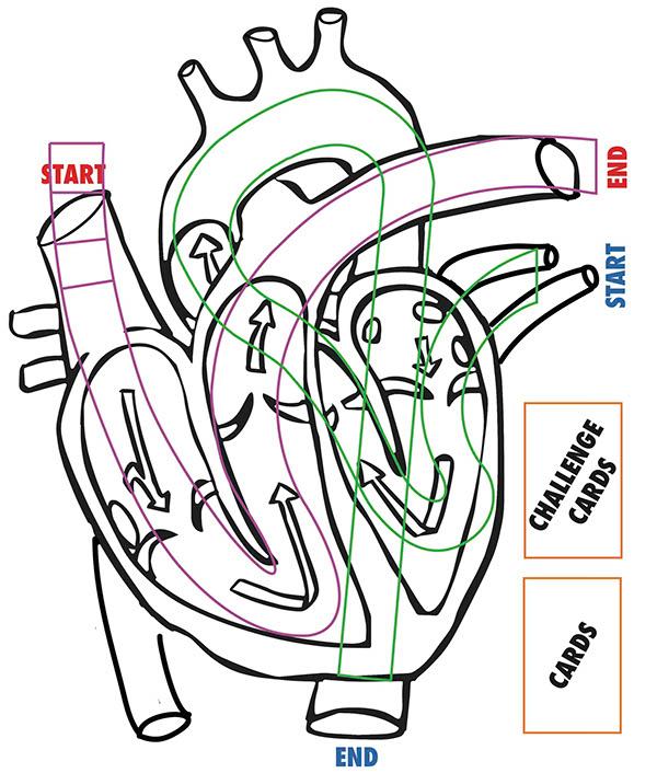 Anatomy Board Game - Heart It on RISD Portfolios