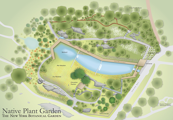 Native plant garden signage nybg on risd portfolios - New york botanical garden directions ...