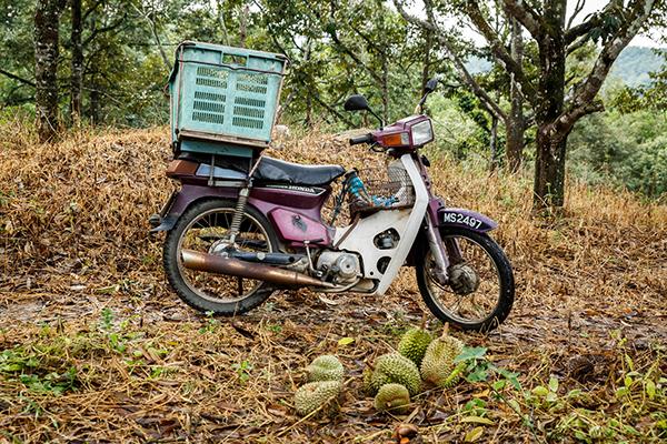 malacca country city Durian Documentary