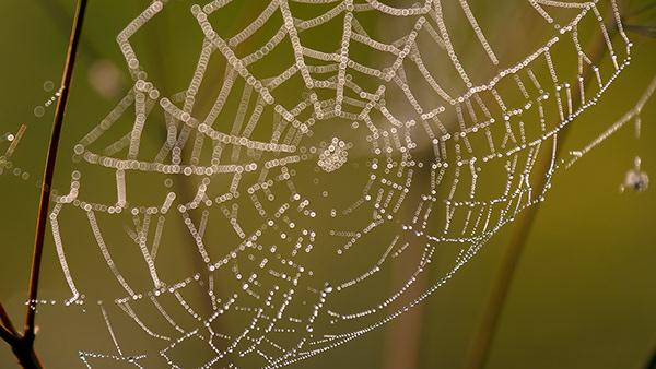 art of web
