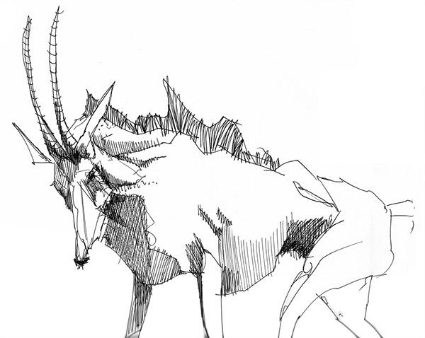 animals prints