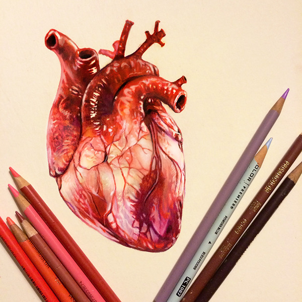 Colored Pencil Heart Study on Behance  Realistic