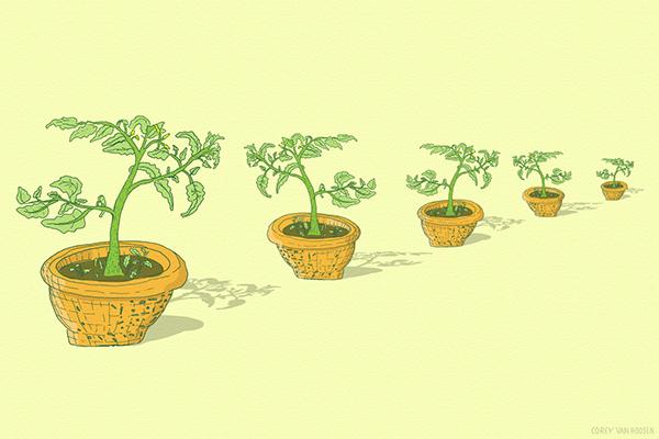plants Tomato wallpaper