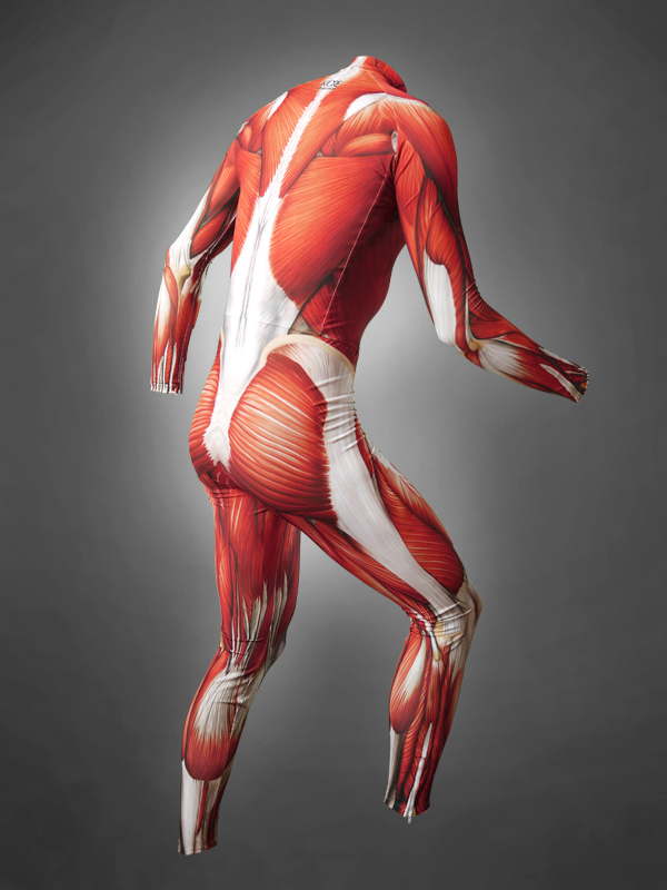 Anatomy skin suit