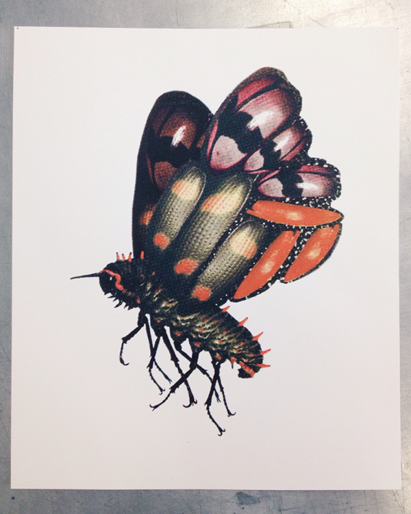 moth butterfly insect science screenprint