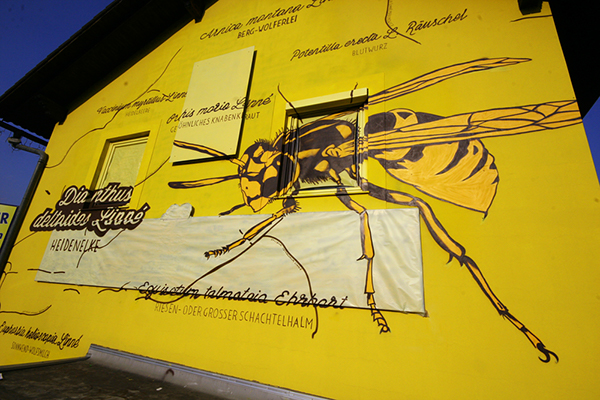 pischelsdorf wasp Wespe hand pollinate bestäuben b54 biodiversity Biodiversität vielfalt styria steiermark pflanzen plants