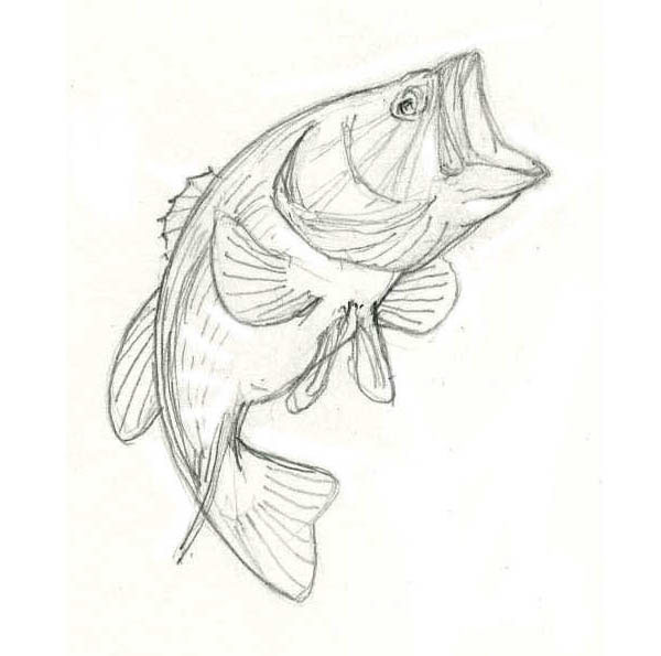 drawing of a largemouth bass on behance