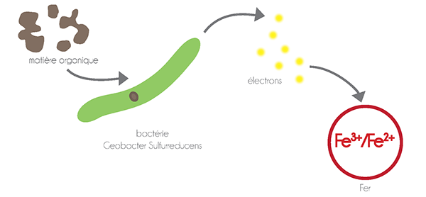 New Energy synthetic biology le laboratoire living machine ArtScience