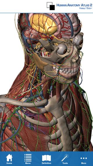 Visible body 3d human anatomy atlas 2