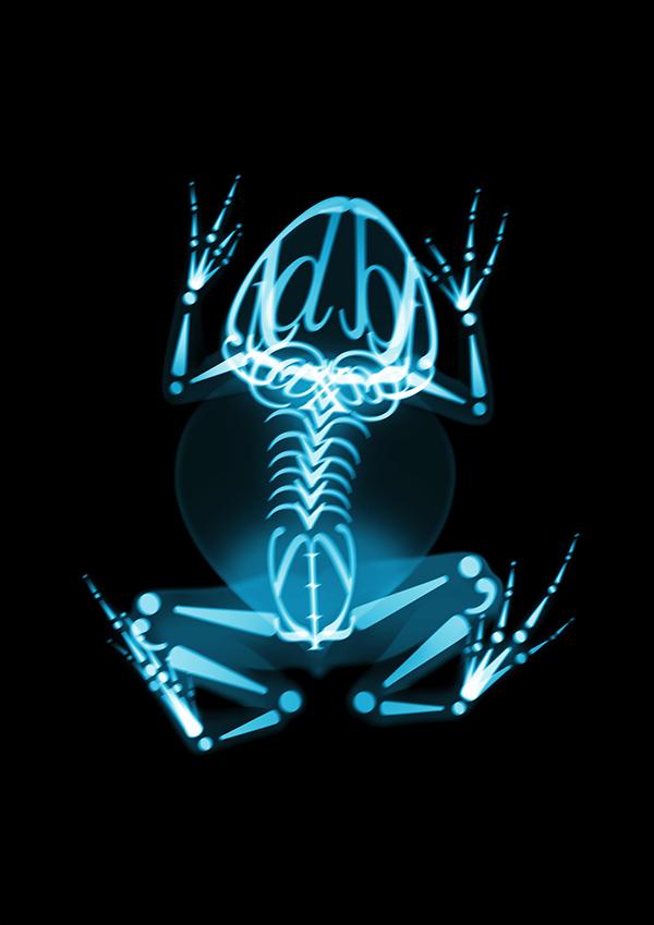 x-ray Calligram animals john baskerville