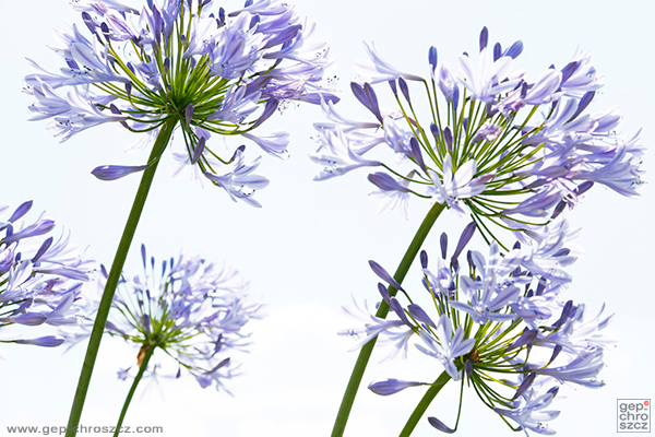 Nature flower plants hi-key photo edit summer Sun Moody feeling wallpaper