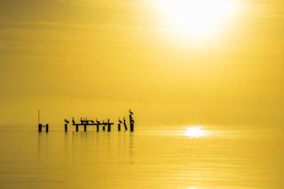 Sunrise salt water pelicans Fisherman Georgia