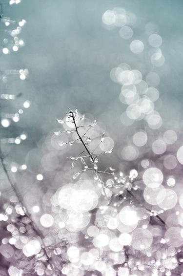 bokeh light Sun reflex Nature Tint water Dew drops