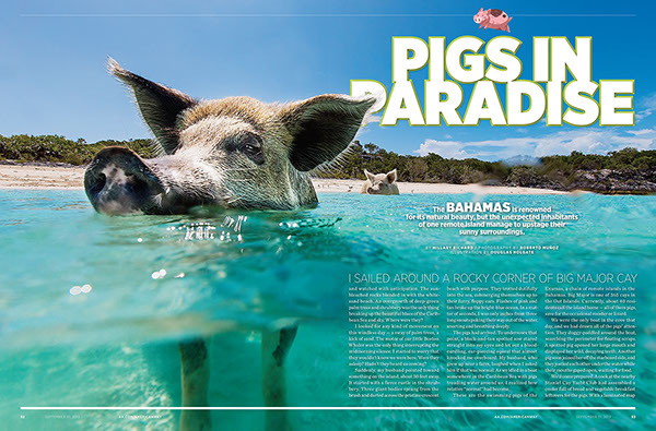 Swimming Pigs in the Bahamas on RISD Portfolios Mark Wahlberg Net Worth