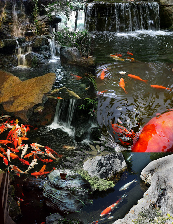 Tranquil basin on philau portfolios for Koi fish environment