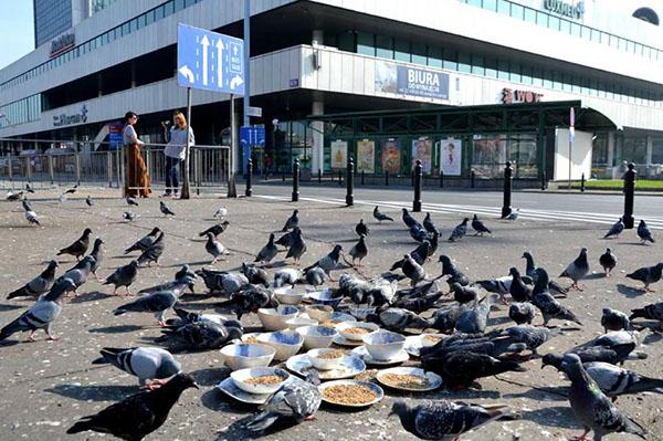 NeSpoon ceramic Pottery installation pigeons birds tableware Food  seed seeds pigeon Street