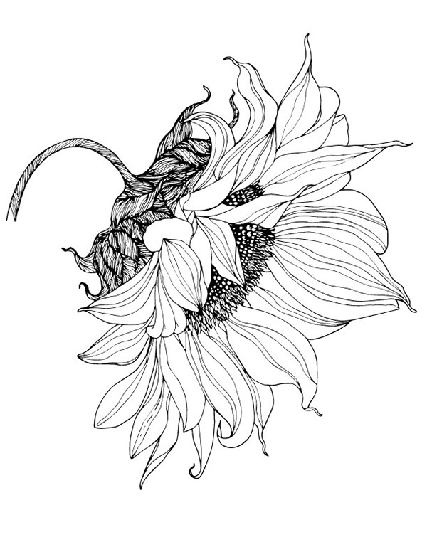 Line Drawing Sunflower : From sunflower motif to pattern on behance