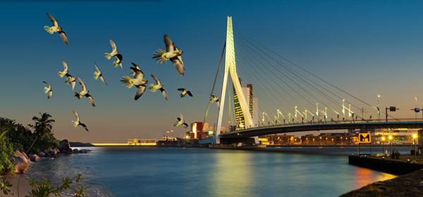 parrot swan erasmus bridge Rotterdam