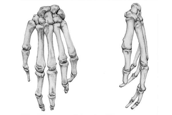 Human skeleton on behance ccuart Choice Image