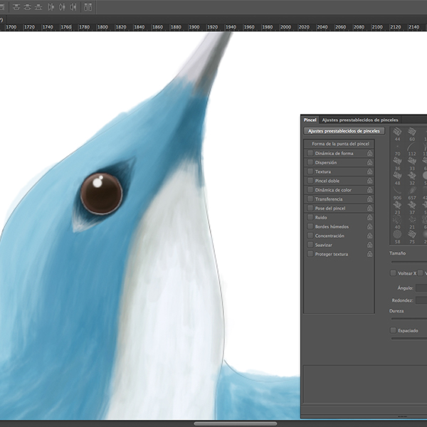 colibri  photoshop  clean  manucrea hummingbird