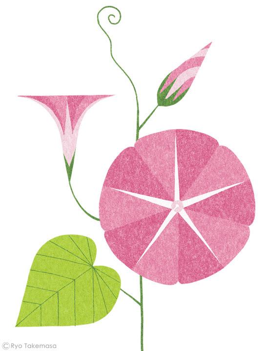 flower,Plant,leaf,botanical art,acorn