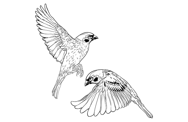 Flying Sparrows On Behance
