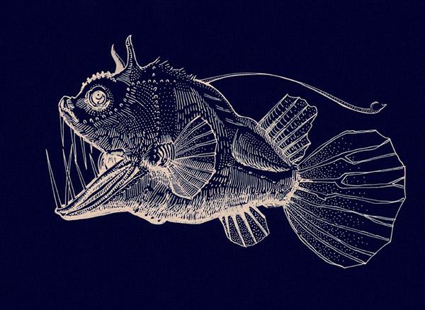 Image Gallery Football Fish