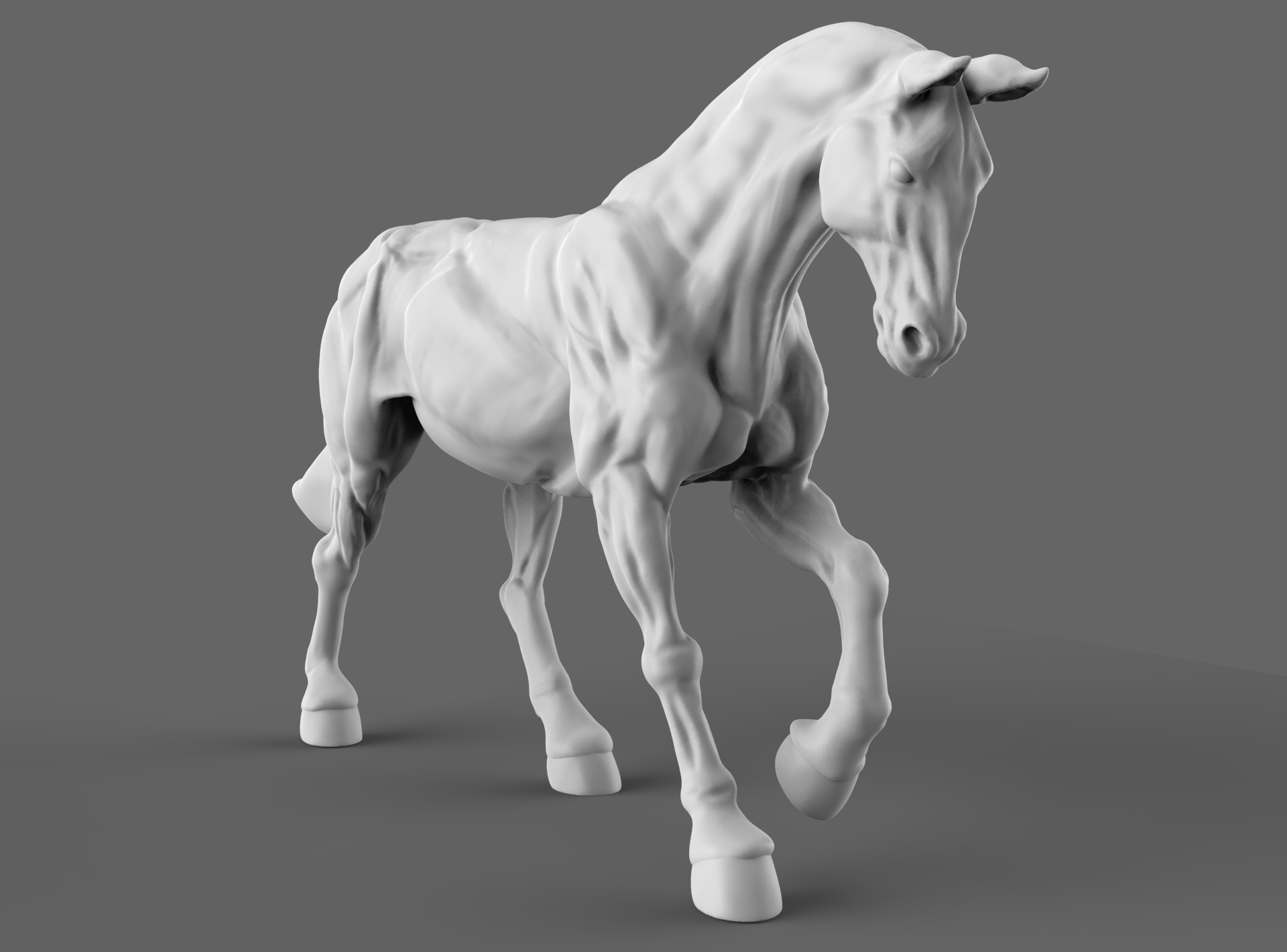 Horse Anatomy Study On Behance