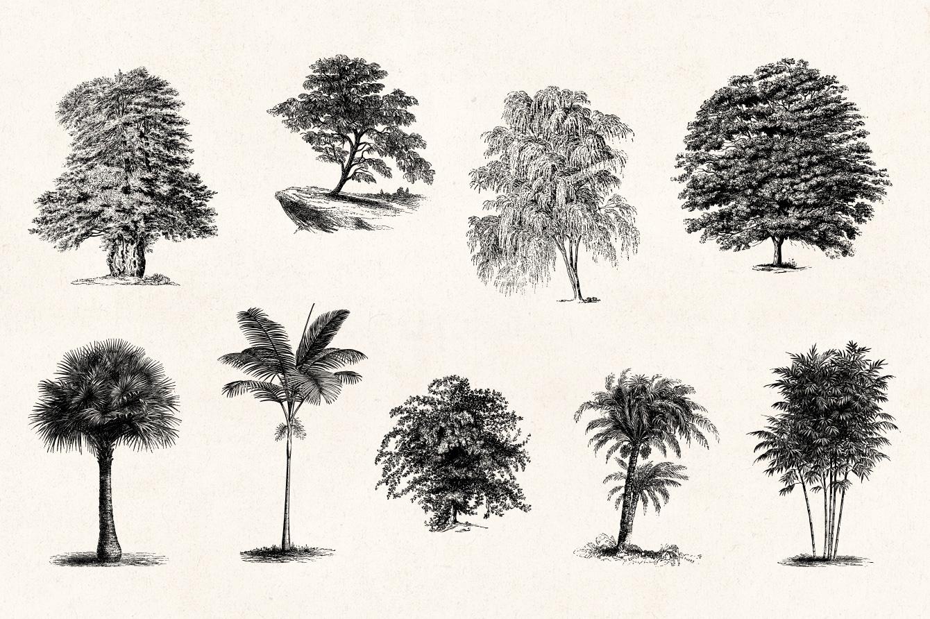 Trees Vintage Illustrations Set On Behance