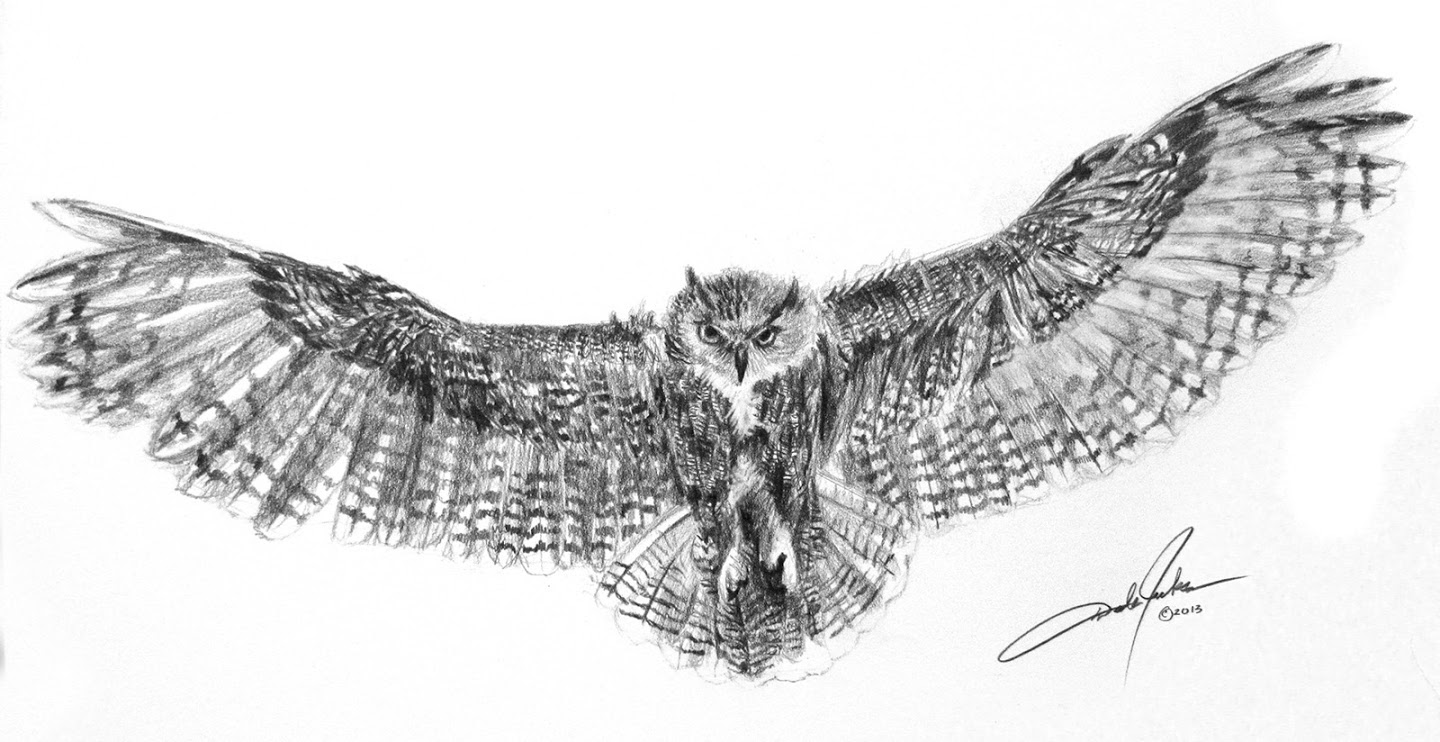 eagle owl in flight drawing