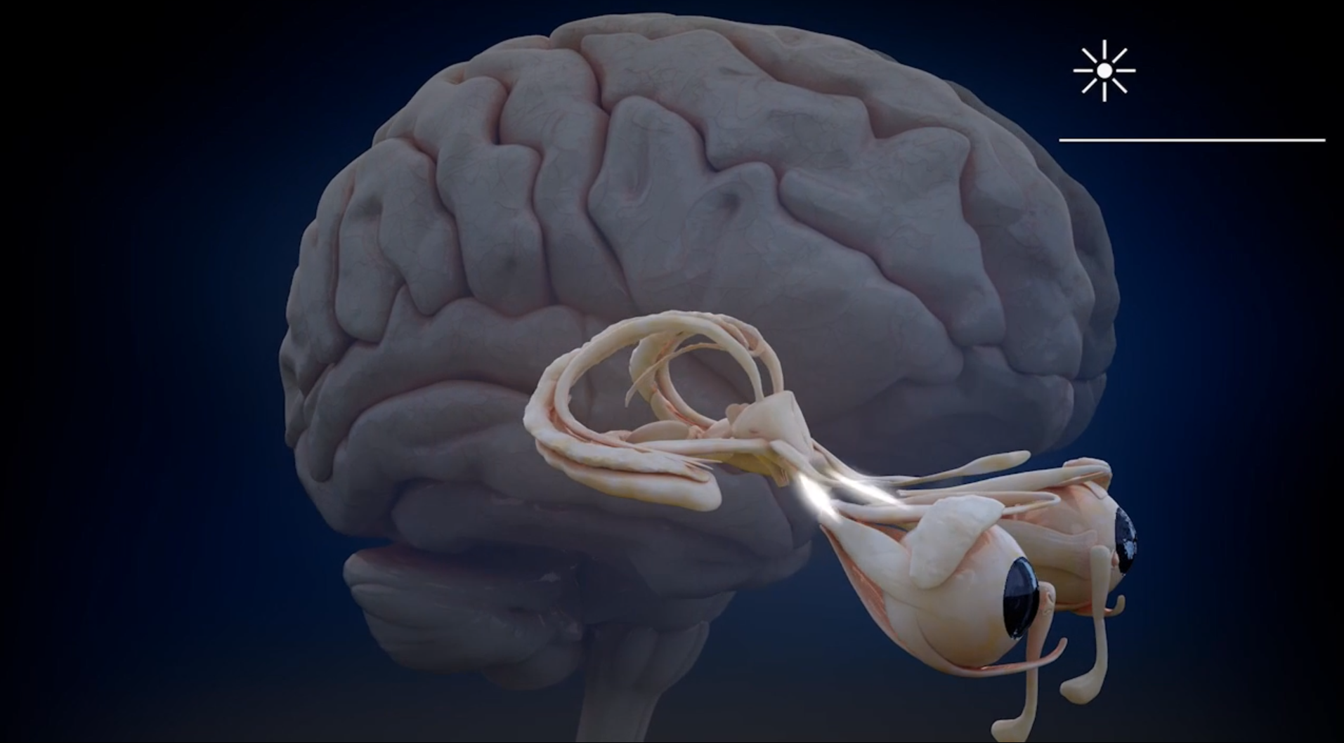 Marcin Lewandowski Cg Animation Human Eye And Retina Section