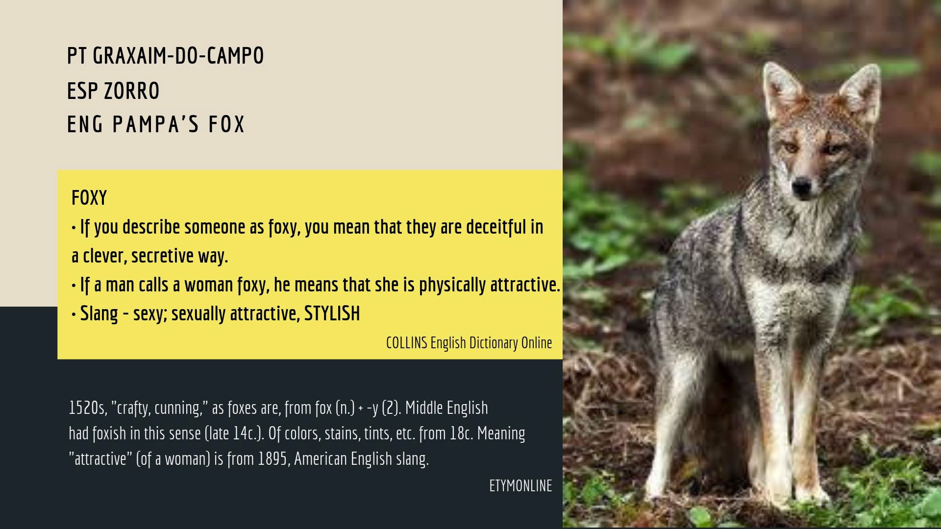 Foxy Meaning In English