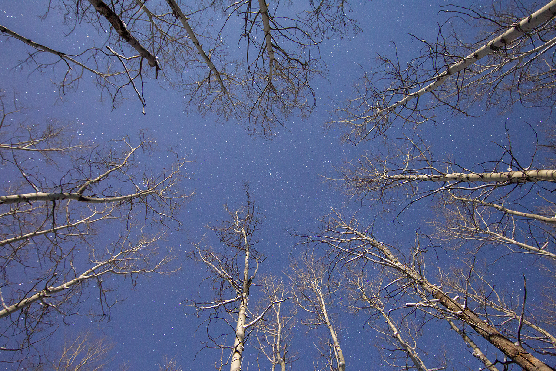 Aspen trees and the stars in Jasper National Park, Alberta.