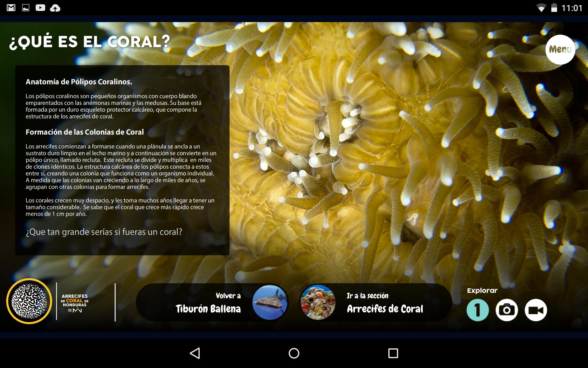 Arrecifes de Coral para Android on Behance