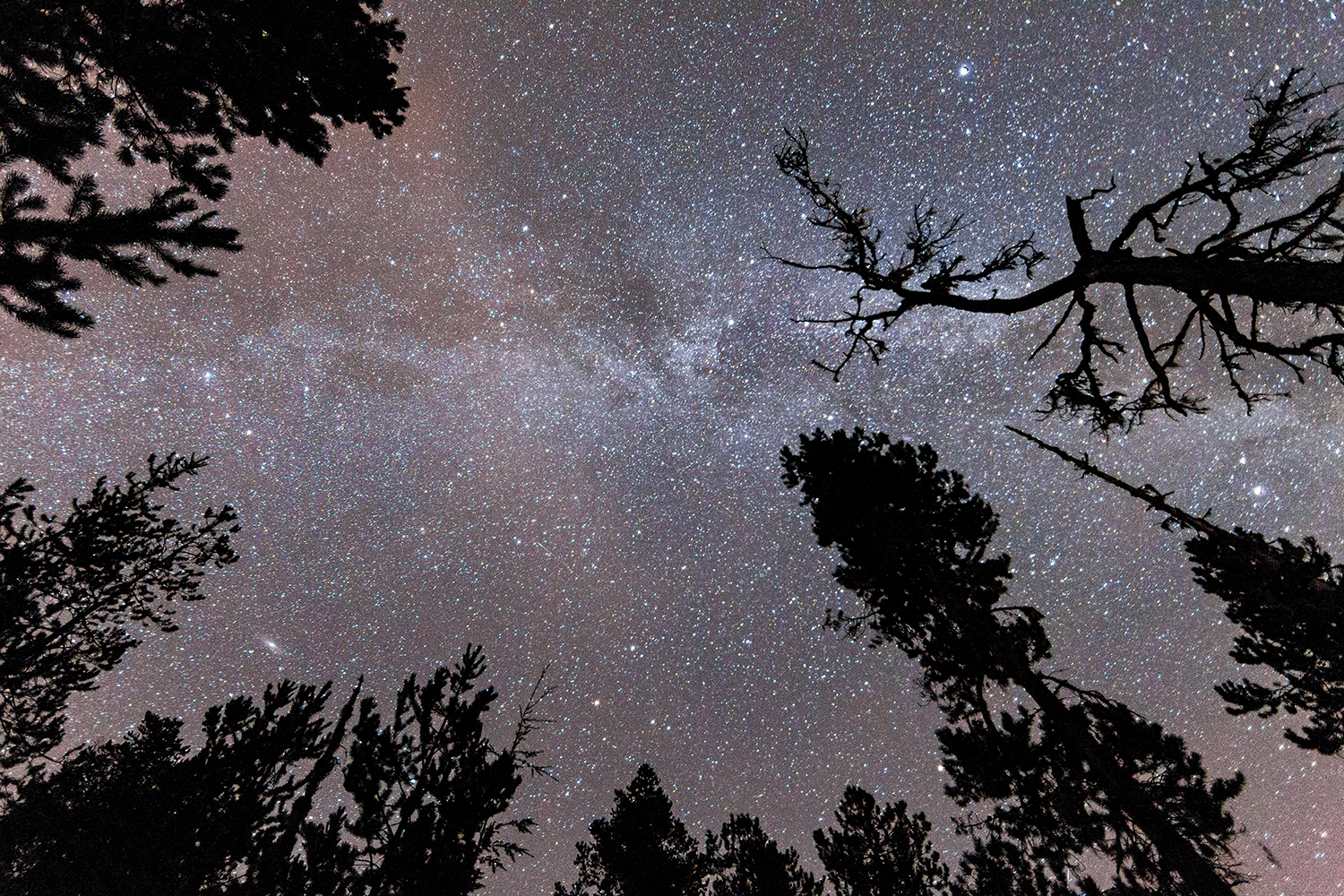 Trees silhouetted by the Milky Way, Terrace, BC.
