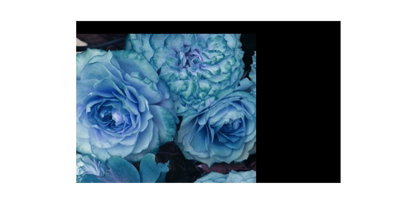 Atlantico Typeface (Free & Editable) on Behance