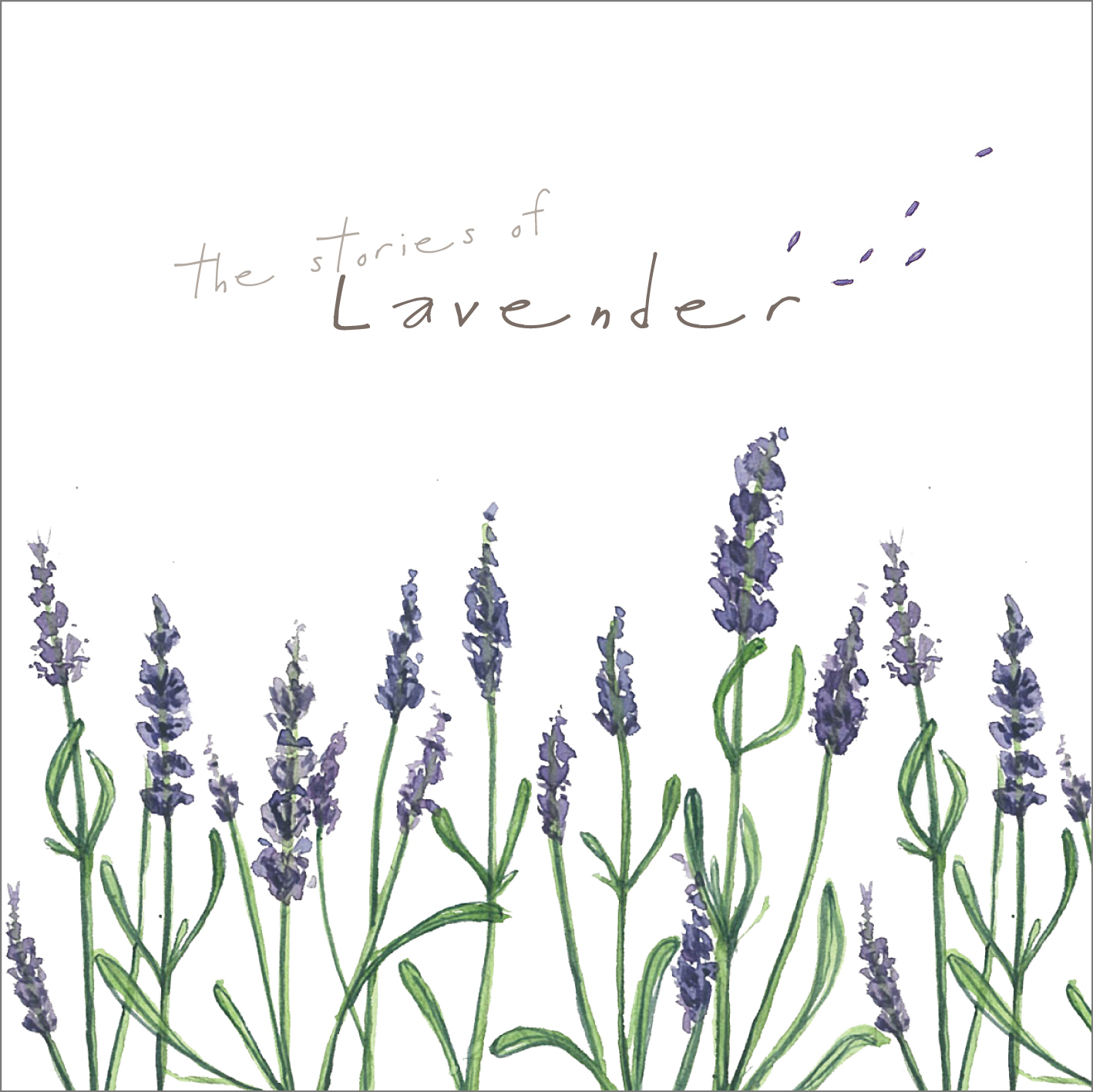 Lavender Talks