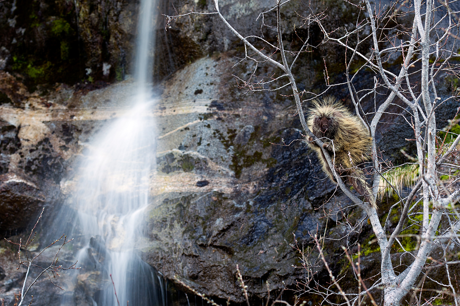 Porcupine and Waterfall