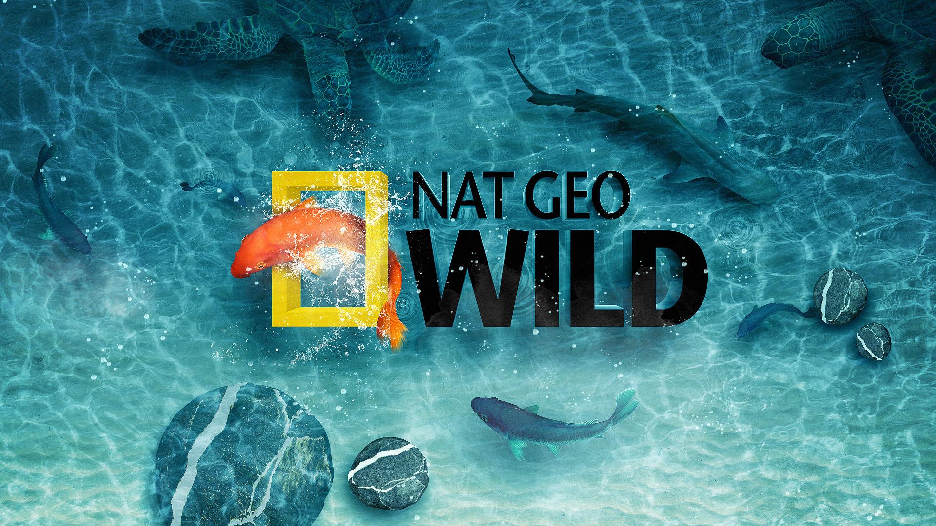 nat geo wild wallpaper hd