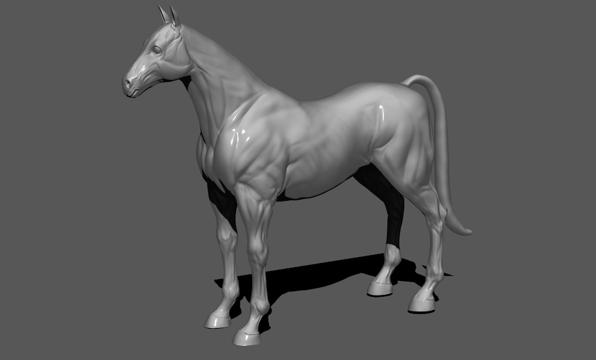 Outstanding Horse Anatomy 3d Images Anatomy And Physiology Tissue